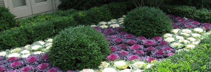 plantas de jard n que soportan el invierno en zaragoza